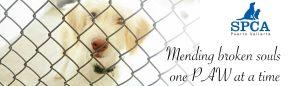 Animal Charities in Puerto Vallarta